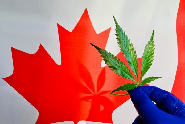 Canadian Marijuana Stocks